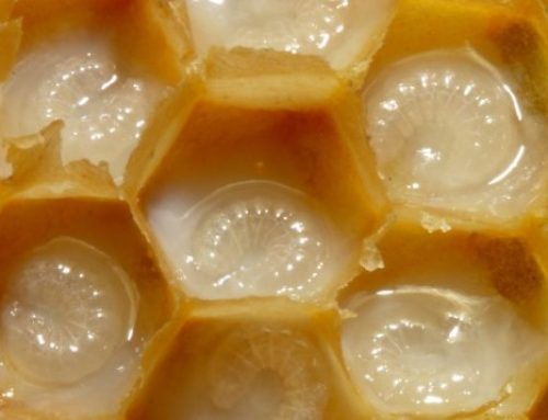Royal Jelly: Your Skin's Best Beauty Secret