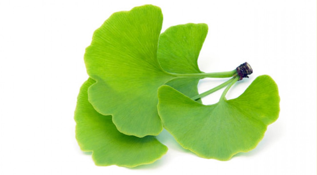 is ginkgo biloba safe