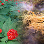 Where Can I Buy Affordable Ginseng