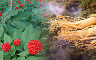 where can i buy ginseng e1476112679104