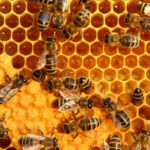 Where Can You Buy High Quality Bee Pollen